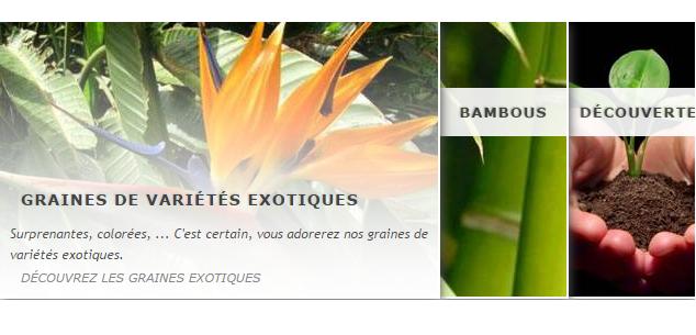 Ventes de graines tropicales, bambous et bonsai